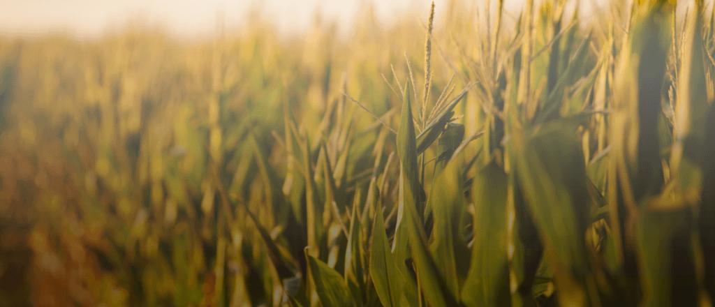La innovación en empresas agroindustriales es clave para preparar su futuro