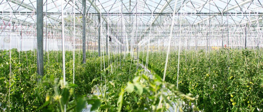 Holanda: Ejemplo de Innovación en Alimentos para Chile