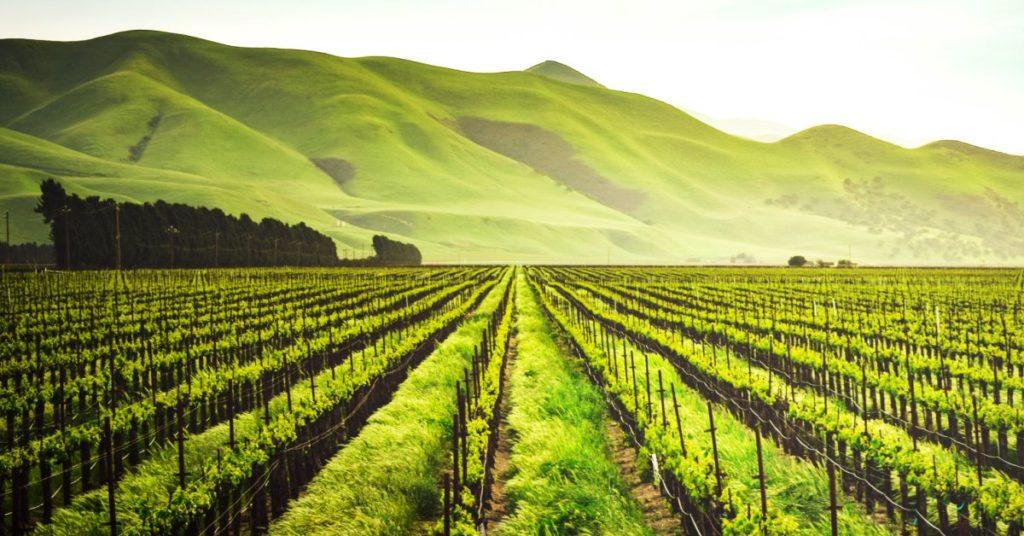 Arturo Herrera: La revolución mundial Agritech