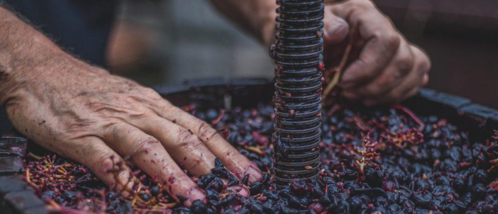 Industria del vino: del arte a los datos