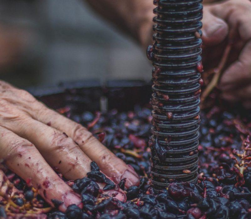 industria del vino chile